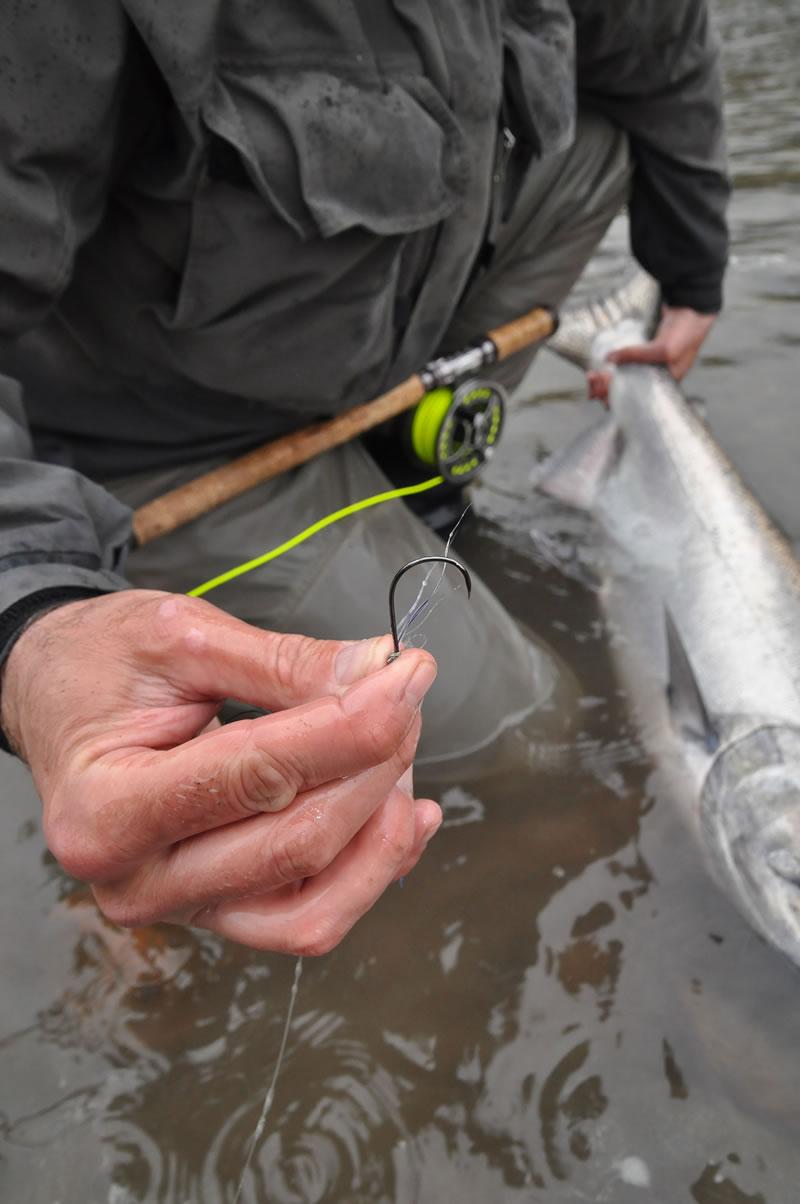 Chinook salmon on the fly for Salmon fishing setup