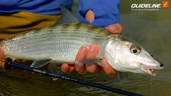 Guideline-Flyfish-Blog-Bahamas-2