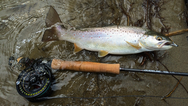 guidelineflyfish-blog-600px-microswing-1-2