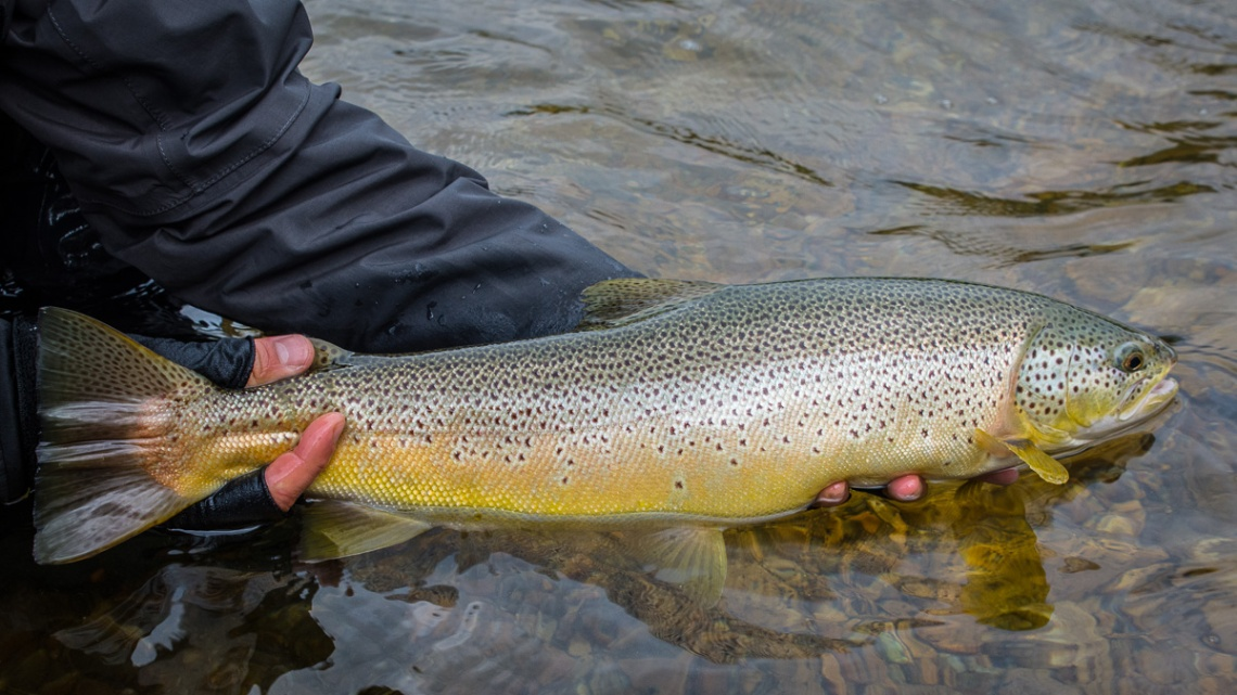 raintroutfly-norge2017-1-6
